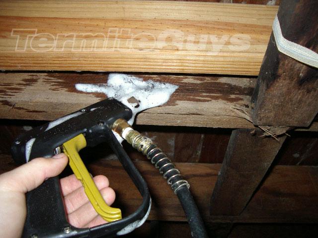 Termite Foam being applied by a qualified technician.