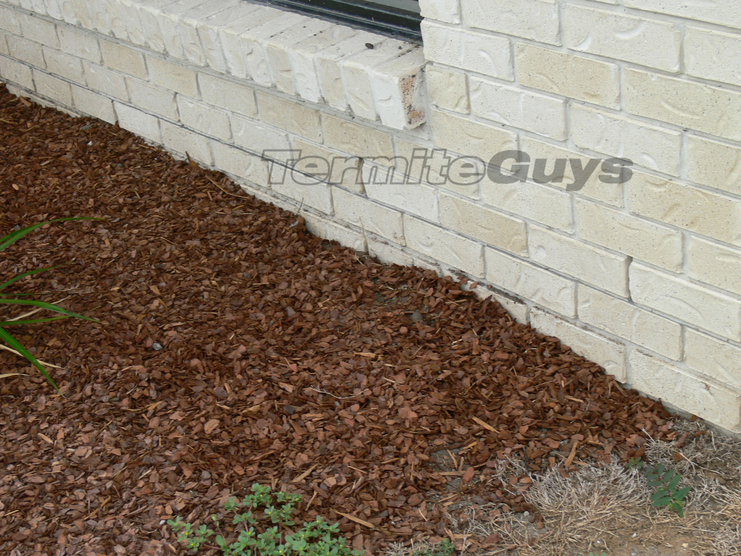 Image Result For Termites In Ceiling