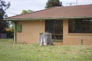 Termite Guys Brisbane - Destroyed-by-Termites-300x201