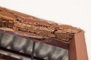 Wood beam totally damaged by termite