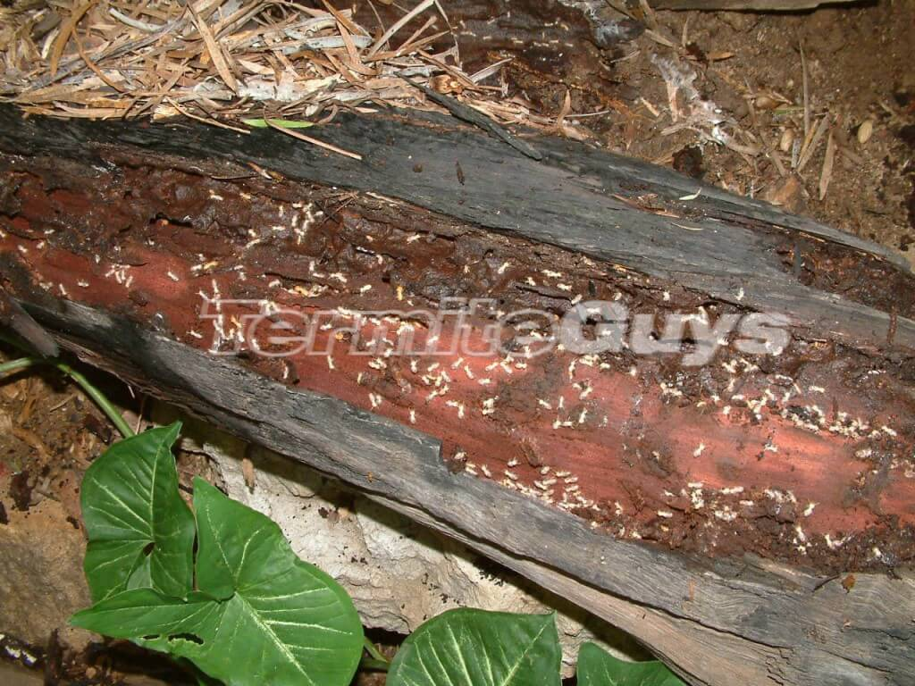 A combination of mulch a rotting log and moisture.