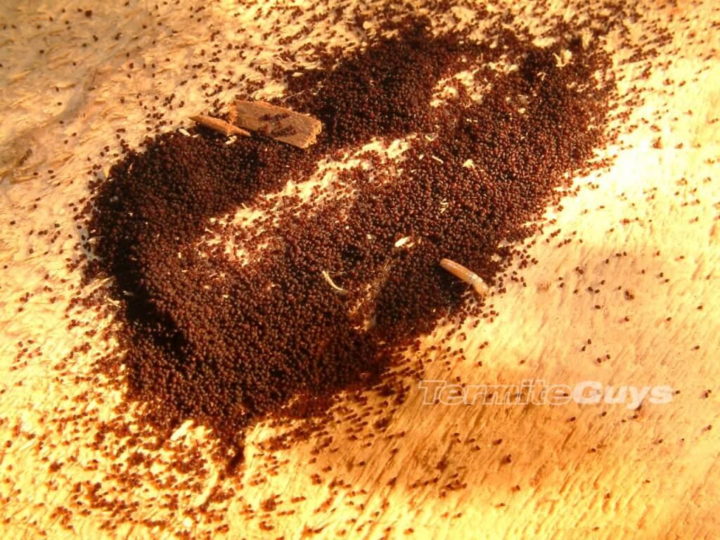 Drywood termitewm