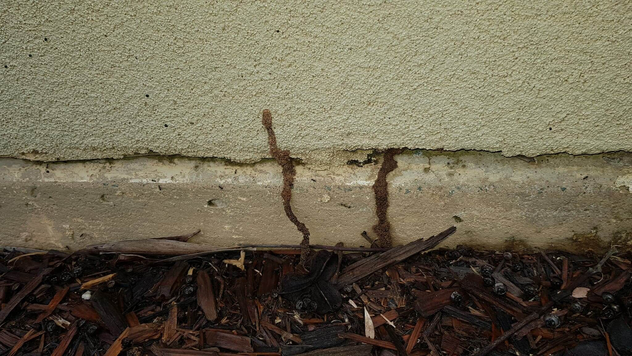 Termites in Forest Lake