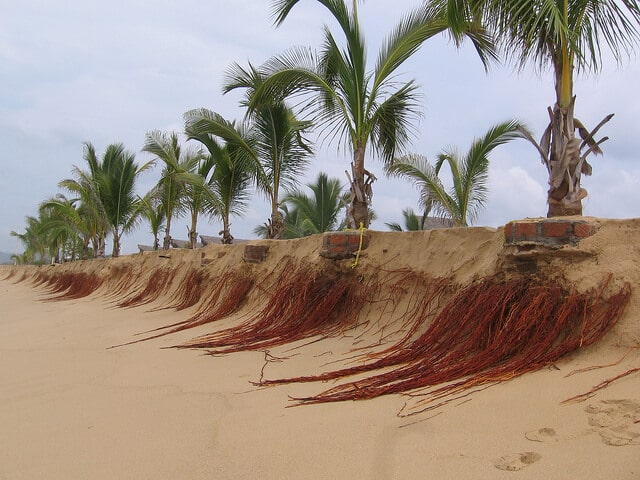 Usually concealed under your house or driveway the root system of a palm can become a termite highway.