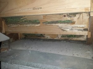 termite damage in Stairs
