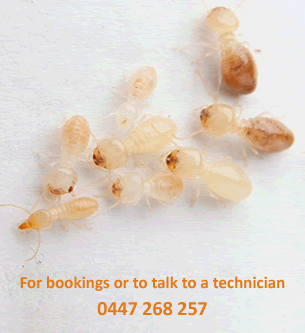 To book a termite inspection or to talk to a technician call 0447268257