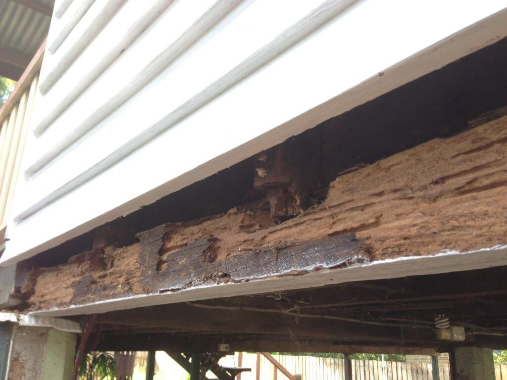 Termites in Lota