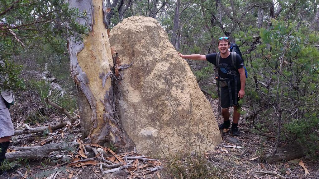 Termite Inspired - Michael inspecting a massive termite mound.
