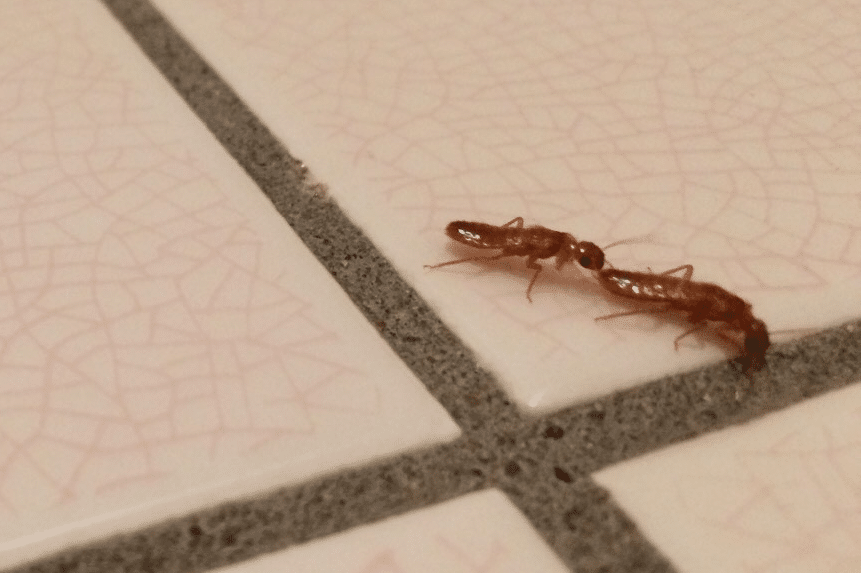 Flying Termite Couple