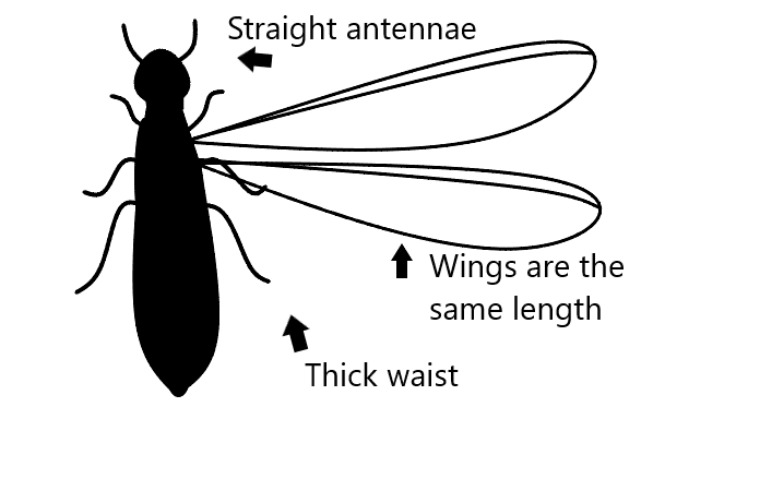 Flying Termite Stencil